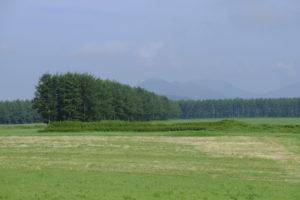 格子状防風林
